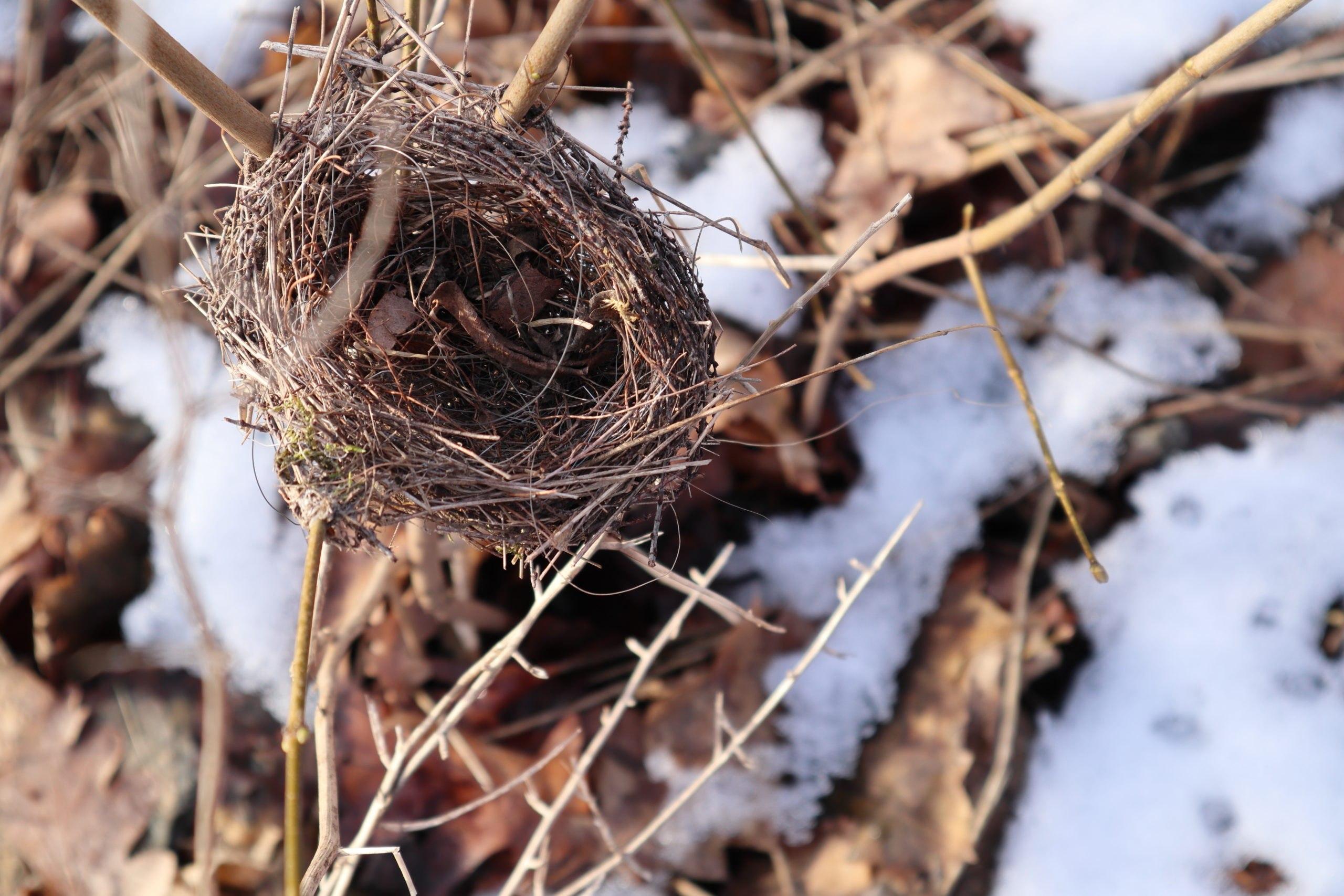 Nest am Zweig - Palmengarten, Leipzig