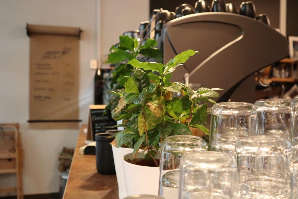Pflanze - Café Obenauf